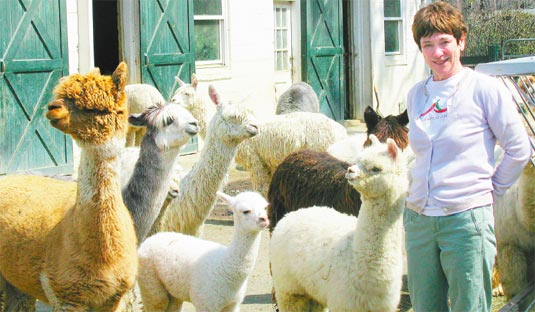 "So, what about those alpacas? ""I wanted to raise something: we had two barns and fields. The previous owner had kept horses. And we had a farmland assessment that we didn't want to lose,"" says Rosenberg."